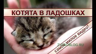 Котята в ладошках: милое видео о животных. Сute kittens, funny animals