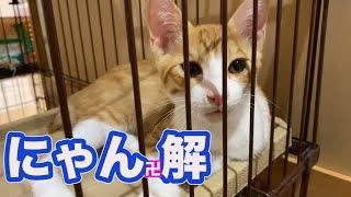 ケージに隔離していた子猫を開放したら・・・