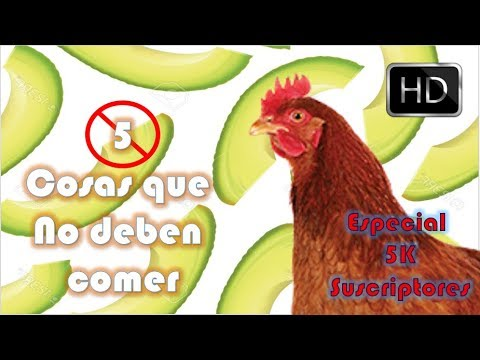Download Youtube: 5 cosas que NO deben comer tus gallinas |Especial 5000 subs (5K)