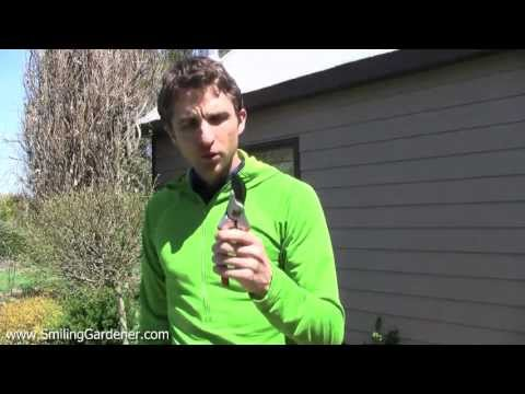 Organic Garden Pest Control - No More Toxins AND No More Garden Pests