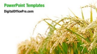 Rice Plant PowerPoint Template Backgrounds - DigitalOfficePro #05325W