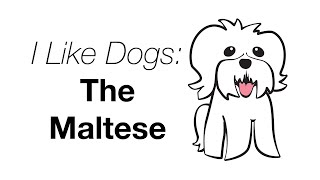 I Like Dogs: The Maltese