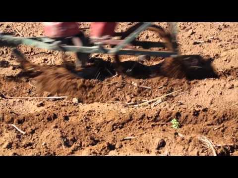 Lesotho Rencontre avec des travailleurs de la terre / Lesotho Meet the land workers