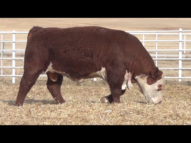 Express Ranches Lot 210