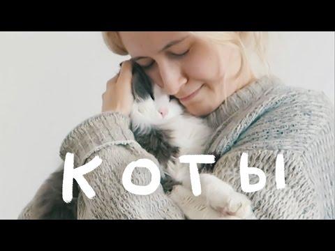 Мультфильм  Жил-был черный кот (2006) Мультфильм на Украинском языке !