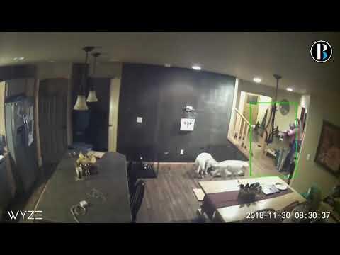 Cámara de seguridad recoge el momento en que se produce el terremoto en Alaska