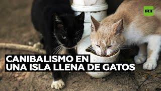 La pandemia genera canibalismo en la isla de los Gatos