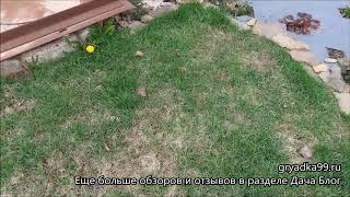 видео Устройство газона на даче в Москве и Подмосковье