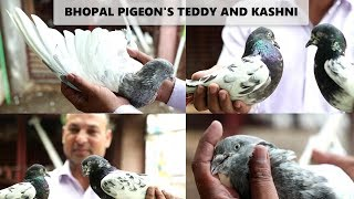 Guru Mandir Pigeon Sunday Market Updates 25-11-2018 (Jamshed