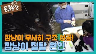 '구조 성공' 깜냥이, 잦은 출산으로 인해 생긴 질탈 I TV동물농장 (Animal Farm) | SBS S…