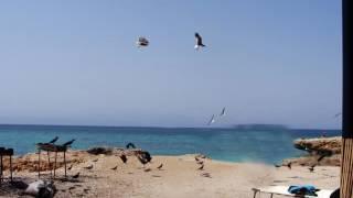 Moucha and Maskali Islands   Djibouti