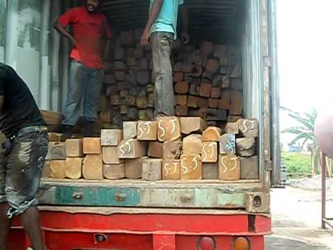 Trinidad Teak Loading SJ TIMBER