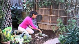 How to Use Eggshells on Tomato Plants