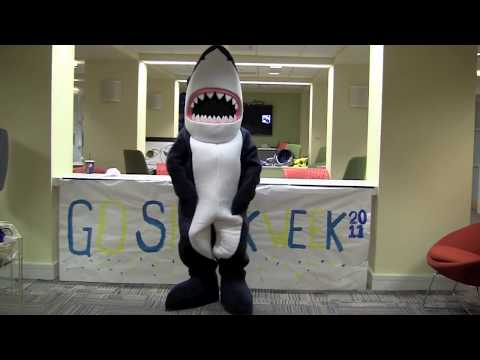 Interview with Stormy the Shark