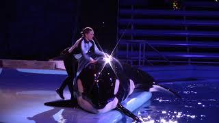 Takara in The First Noel (Miracles at SeaWorld San Antonio on 11/16/18)