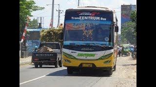 executive CEPU   review trans Zentrum MK TZ 75// dan bus di terminal cepu