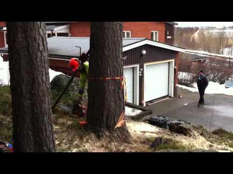 Trädfällning - Storumans Folkhögskola להורדה