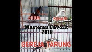 MASTERAN| Kompilasi Burung CILILIN, KENARI, dan GEREJA TARUNG