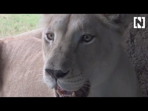 A first look at the Dh1 billion Dubai Safari