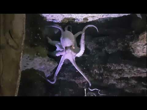 Aquarium La Rochelle (France)