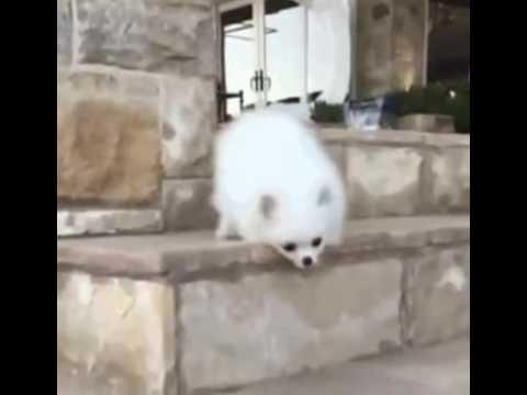 Собачка упала с лестницы