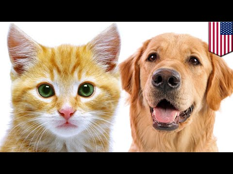 Cats are just as smart as doggos, says study - TomoNews