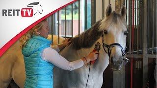 Das Pferd scheren - Tipps und Tricks