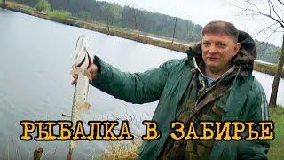 Рыбалка в Забирье. Ловля щуки