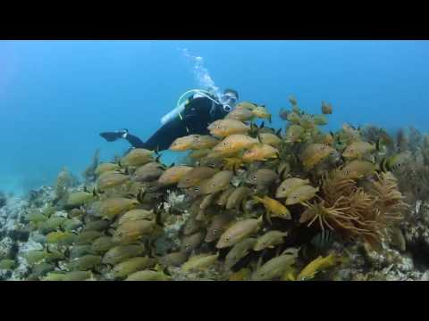 Why the Florida Keys is Perfect for New Divers
