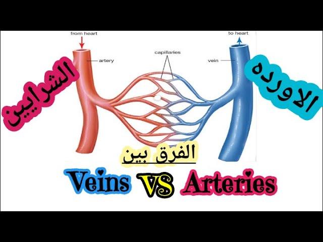 الفرق بين الاورده والشرايين Difference Between Veins Arteries Youtube