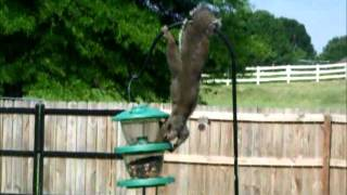 haha Mr. Squirrell haha Thumbnail