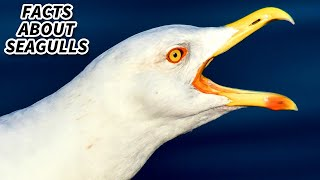 Seagull facts: they're technically gulls, but we're rebels | Animal Fact Files
