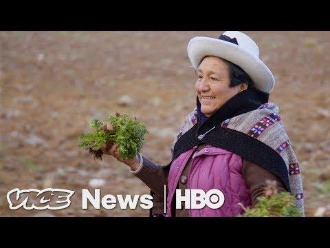 Maca Plant Pirates in Peru (HBO)