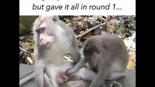 Monkey having sex funny