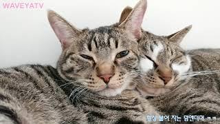 귀염뽀짝 깨물어주고싶은 고양이의 웃긴 얼굴