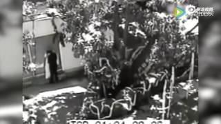 監控實拍:一位新娘婚禮當天與其他男人小樹林私會 沒想到被拍到他們在。。。