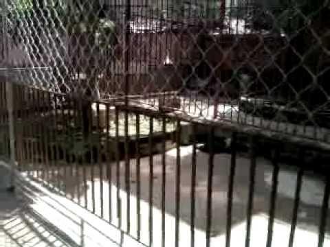 Video0026.mp4 trai cho tran gia