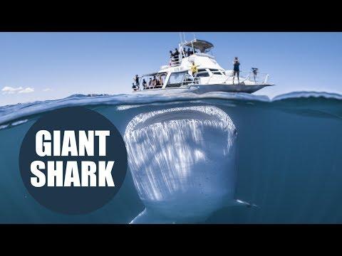 Ισως η πιο εντυπωσιακή φωτογραφία -Το μεγαλύτερο ψάρι στον κόσμο, με το αβυσσώδες στόμα