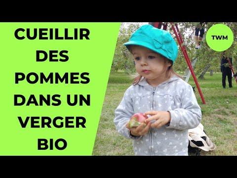 On A Cueilli Nos Pommes Dans Un Verger Bio! | Notre Weekend à Montréal