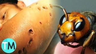 Los 10 Insectos Más Letales Del Mundo