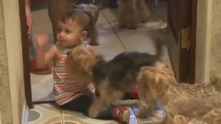 Дети и собаки. Забавные дети. Маленькие дети. Смешное видео. Funny kids.