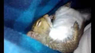 Pet Squirrel sleep on my side