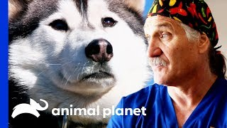 Vets Head into the Rockies to Examine and Treat 30 Rescue Dogs | Dr. Jeff: Rocky Mountain Vet