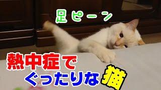 熱中症になりそうでも元気に遊ぶ猫とぐったりとしている猫の違いとは?!