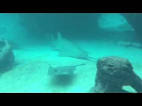 Shark Vs Saw Fish