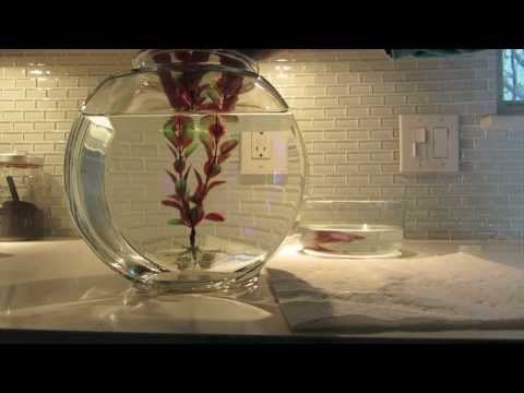 How to Change Your Fish's Water