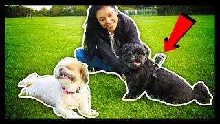 ATTACHING A CAMERA TO THE DOGS! - Vlog 30 -