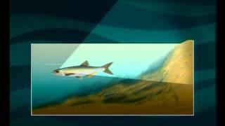 Диалоги о рыбалке -  150 -Осення ловля уклейки