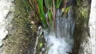 Воронцовский парк. Алупка.(, 2012-07-31T19:39:14.000Z)
