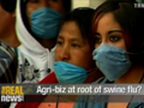 Agri-biz at root of swine flu?
